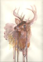 Antlers by maltrick