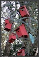 Bird Boxes by Arte-de-Junqueiro