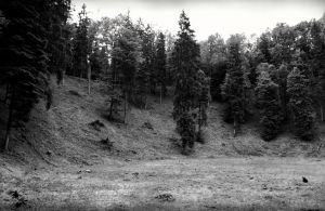 Devils sowing forest by Varanas