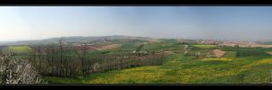 Spring in Alsace by macareux24