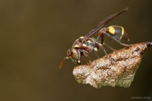wasp_03 by pedro-96
