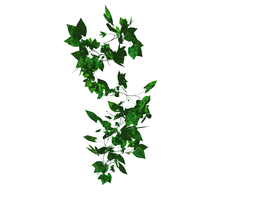 Stock ivy on white by lish-stock