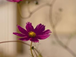 another flower by Enkidulan