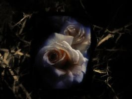 life is like roses by diananaturelover