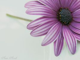 Violet- Flower by MariamMohammed