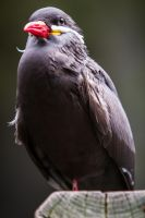 Inca Tern by 904PhotoPhactory