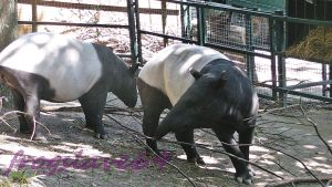 tapir mother and son by frogslave69