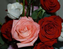 Rose stock 1 by anbdstock