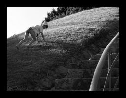 Follow your own path by Marichromatic