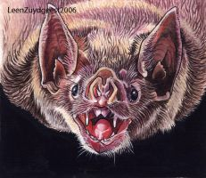 Common vampire bat by LeenZuydgeest