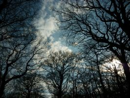 The Trees Creep In by worksteady