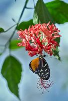 Butterfly Stock 18 by NellyGraceNG