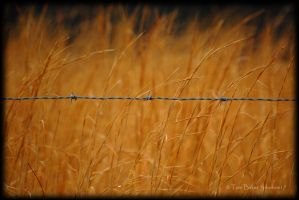 weed control by photom17