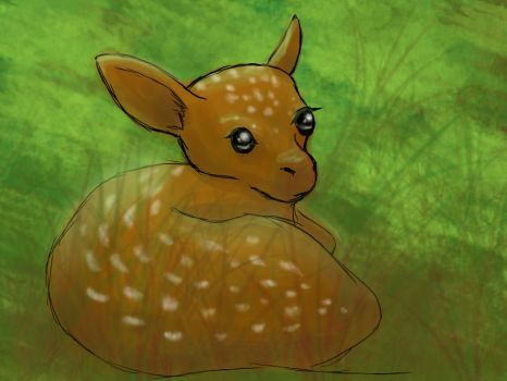 Baby Deer by blakdragoon