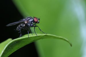 The Fly 03 by s-kmp