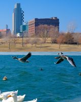 Flying by AquarianPhotography