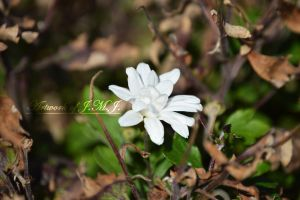 Unexpected White Flower by siannajmj