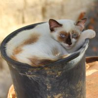 Cat in the plant pot by Jorapache