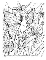 Lily Fairy Mouse coloring page by TabLynn