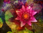 Another Pink Waterlily by Tackon