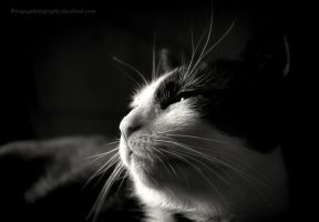 dommin kitty by wroquephotography