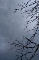 Tree Branches Sky Stock by Moon-WillowStock