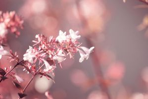 Day 289: Autumn Blossoms by Kaz-D