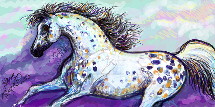 Appaloosa Horse Running by staceymayer