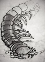 Centipede Tattoo(wip) by tattoo-love-forever