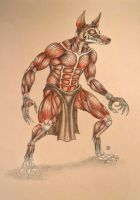 Anubis Muscle Study by hooksnfangs