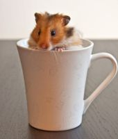 A cup of hamster by MarvinDiehl