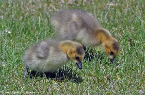 Fuzzy pair by hunter1828