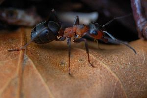 ant by aimforthefloor