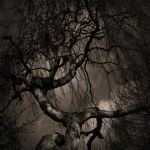 the tree by freakeesh