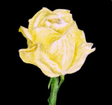 Yellow Rose by assplosion