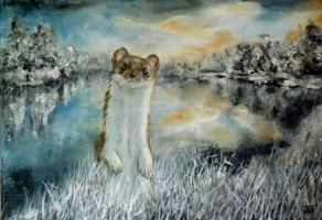 Ermine (Hermine) by jbillustration