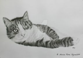 Drawing, commissioned kitty. by MarinaPalme