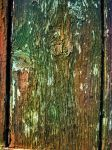 old wood by ftourini-stock