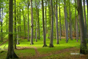 Sherwood Forest by ckaj