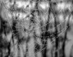 Spiderweb by wheelerhelen