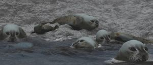 Seals by fractal2cry