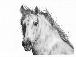 Horseportrait by CKArtpage