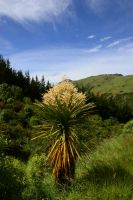 Cabbage Tree by LiquidityImages