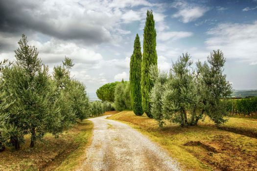 Tuscan Road by CitizenFresh