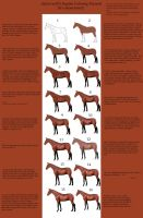 Horse Tutorial by ArtLover25