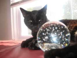 Ladamere and the Glass Orb 7 by fluffyfangedfriends