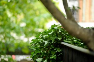 Ivy 3 by AndersonPhotography