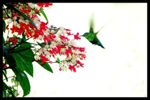 Hummingbird by Kelyen