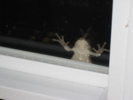 Beware the peeping frog by TheRealSneakers