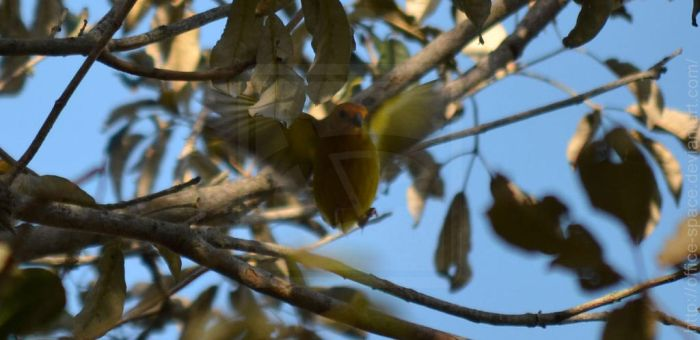 Spotted: Wild Canary by Office-Space